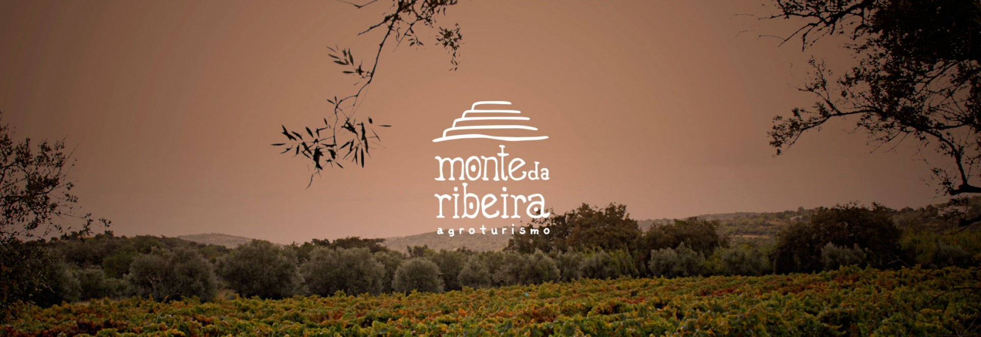 vineyard view with Monte da Ribeira logo